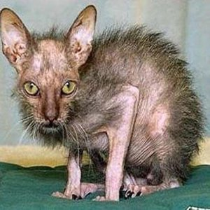 Ugly-Cats-14